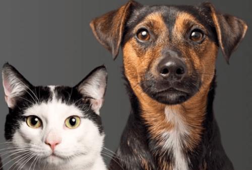 Dog-Cat 2