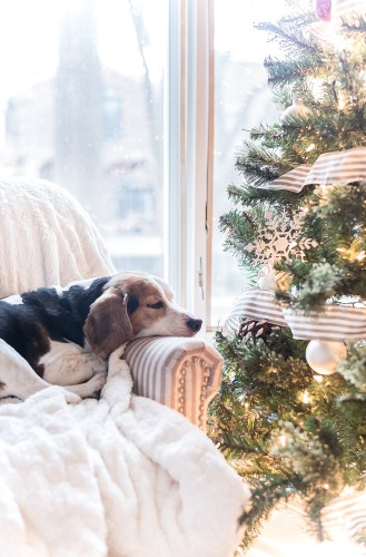 Ernie The Beagle - Christmas