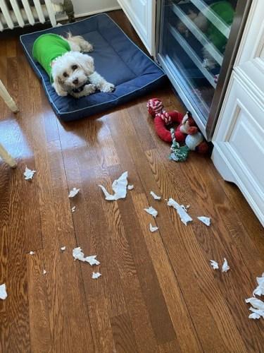 Katie - Chili Dog Decorates