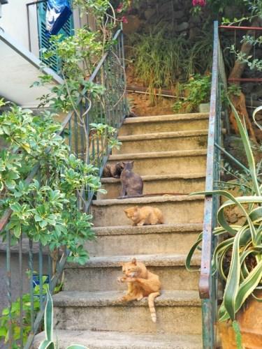 Cats From Italy