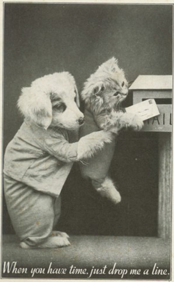 amazing-vintage-cats-pictures-15