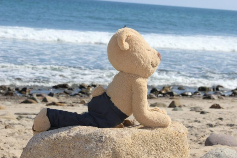 Meddy Teddy up dog on beach