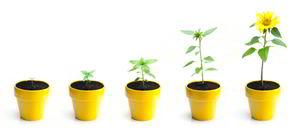 Croissance d'une plante