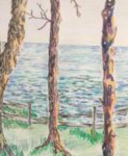 CT Sea Through Trees