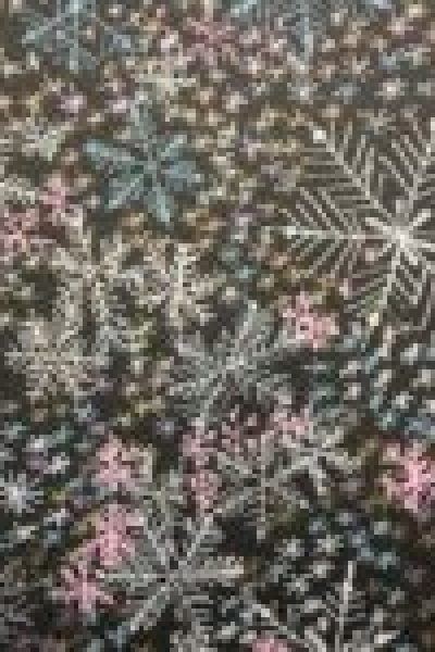 snowflakes - dense