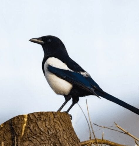 Are you a Marketing Magpie? Creationz Marketing, Marketing Consultancy, Beeston, Nottingham, Nottinghamshire