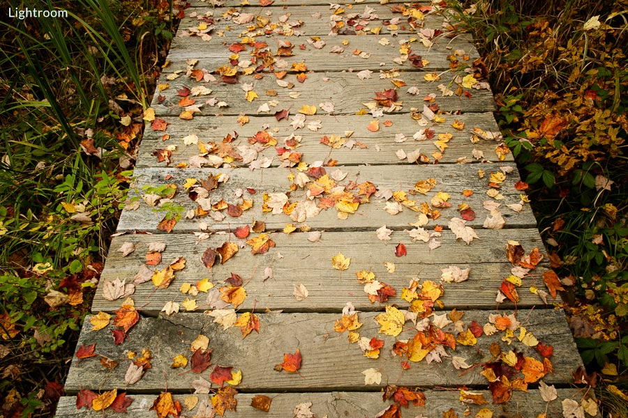 Photo of autumn leaves on boardwalk processed in Lightroom