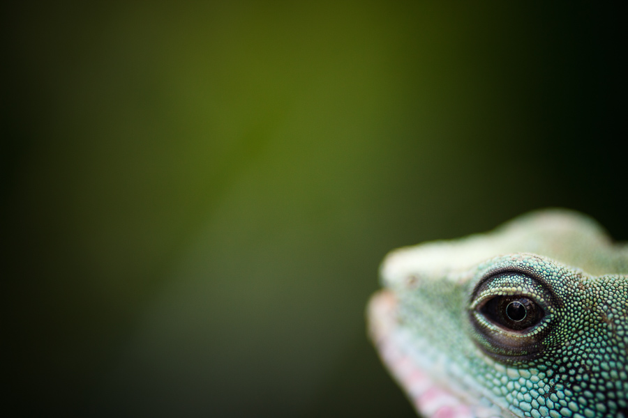 Moody color photo of green lizard