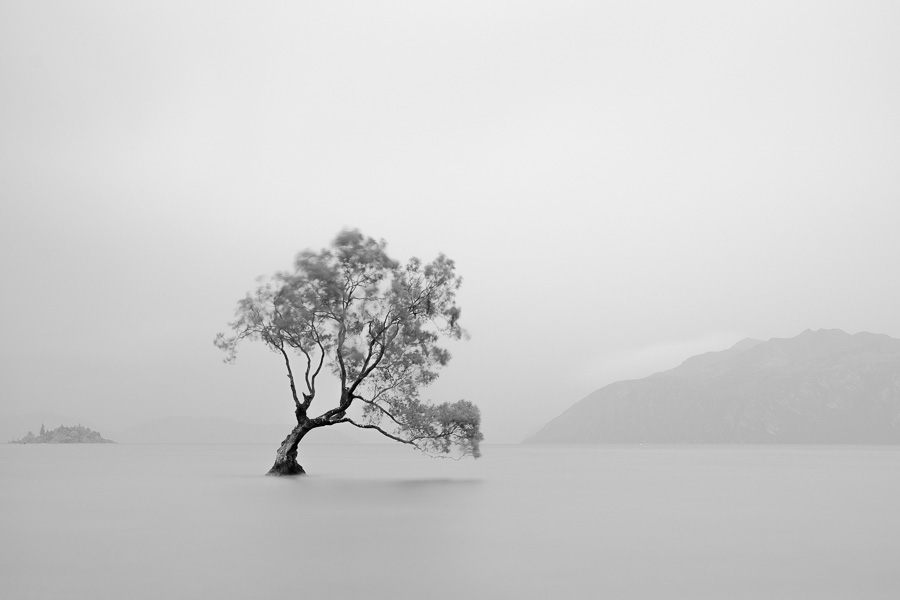 Black and white landscape photo of the Wanaka Tree in New Zealand