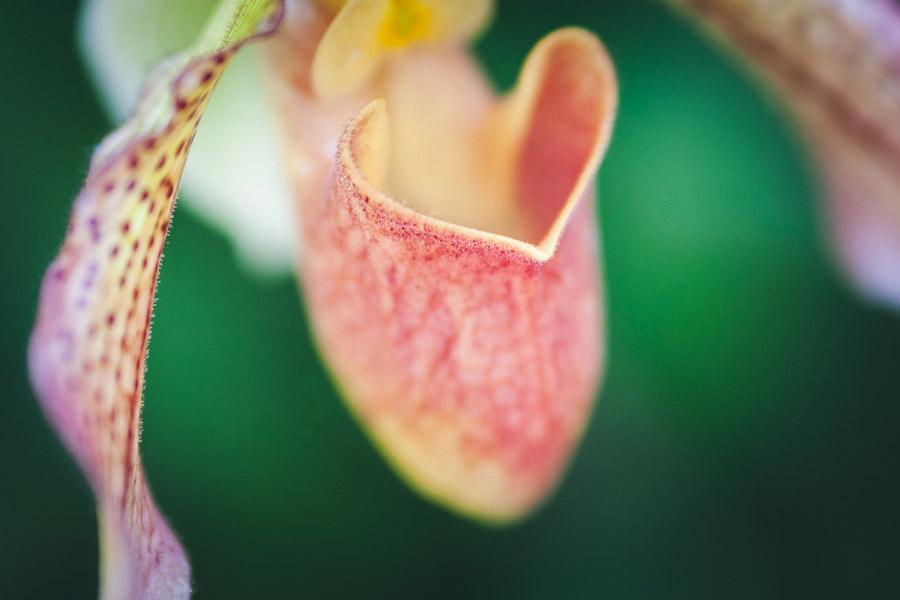 Close-up flower photo
