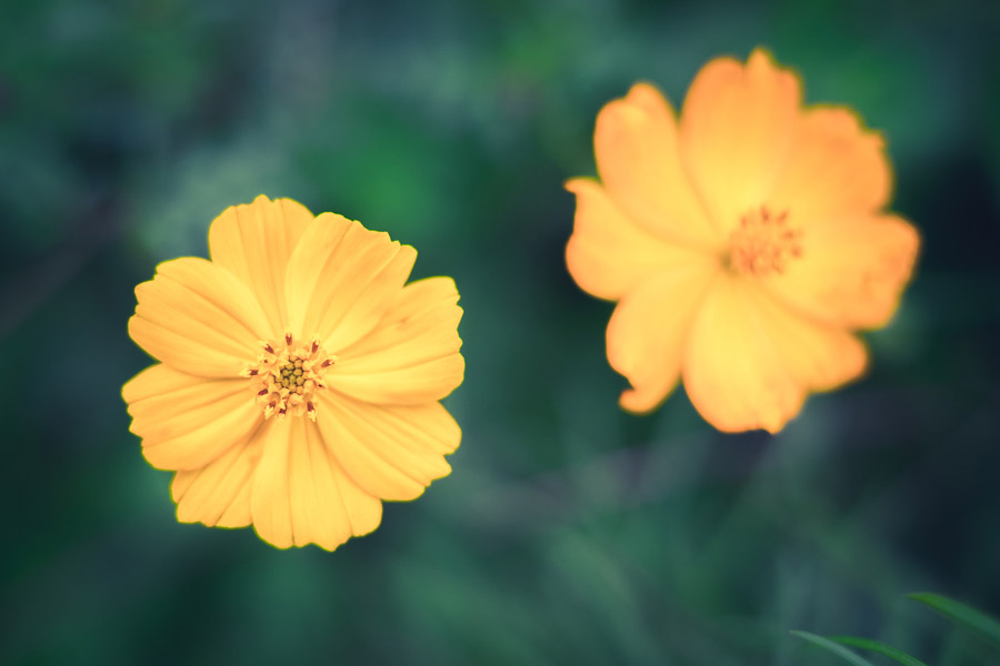 Photo of two flowers