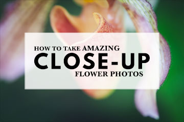 https://www.creative-photographer.com/close-up-flower-photos/