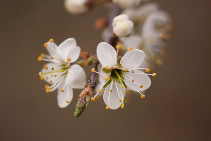 Photo of flower made with 12mm extension tube