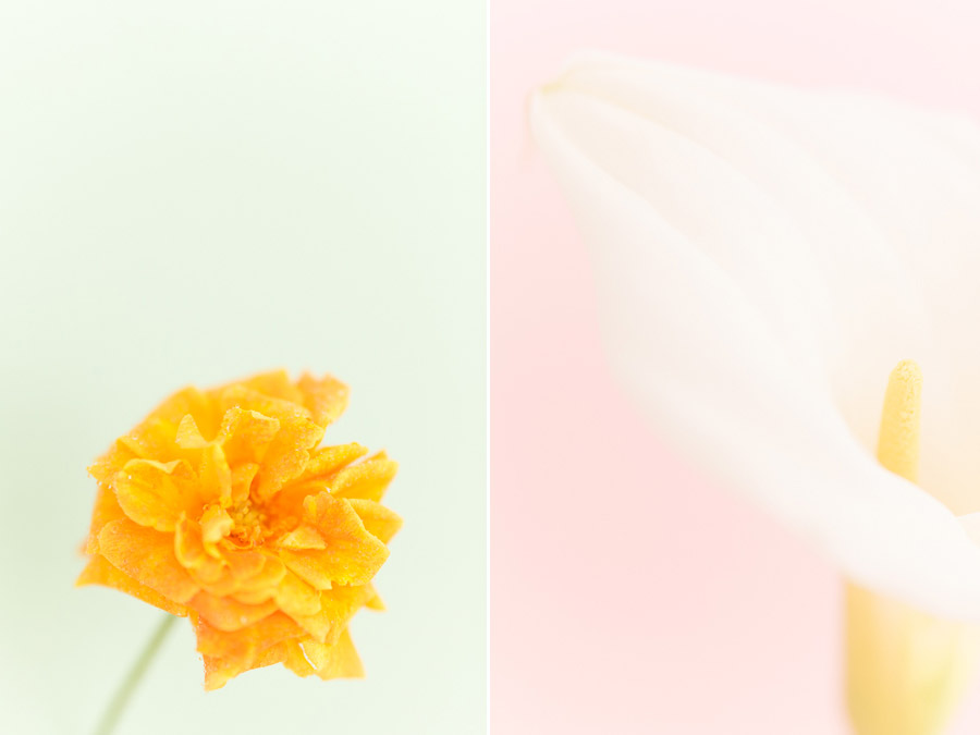 Beautiful high key photos of flowers