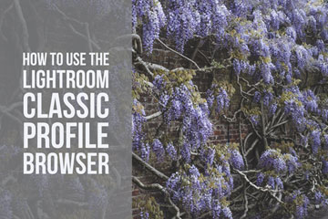 How To Use The Lightroom Classic Profile Browser