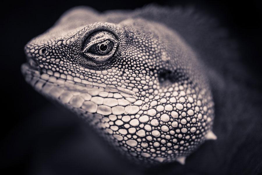 Split toned black and white photo