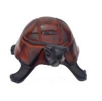 TortoiseKisiiFront