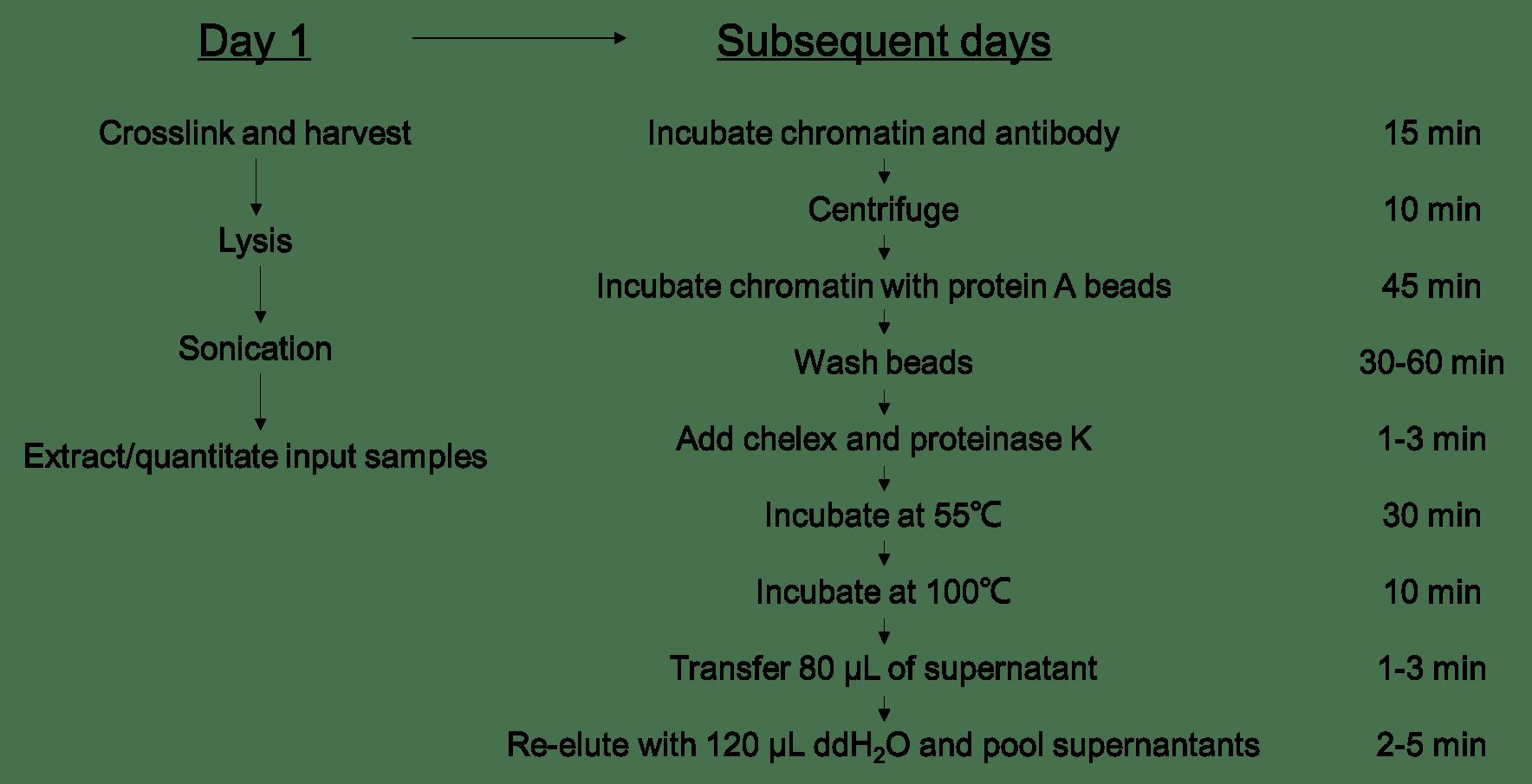Fast Chromatin Immunoprecipitation Assay