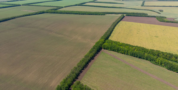 Agricultural Surveys with Drones