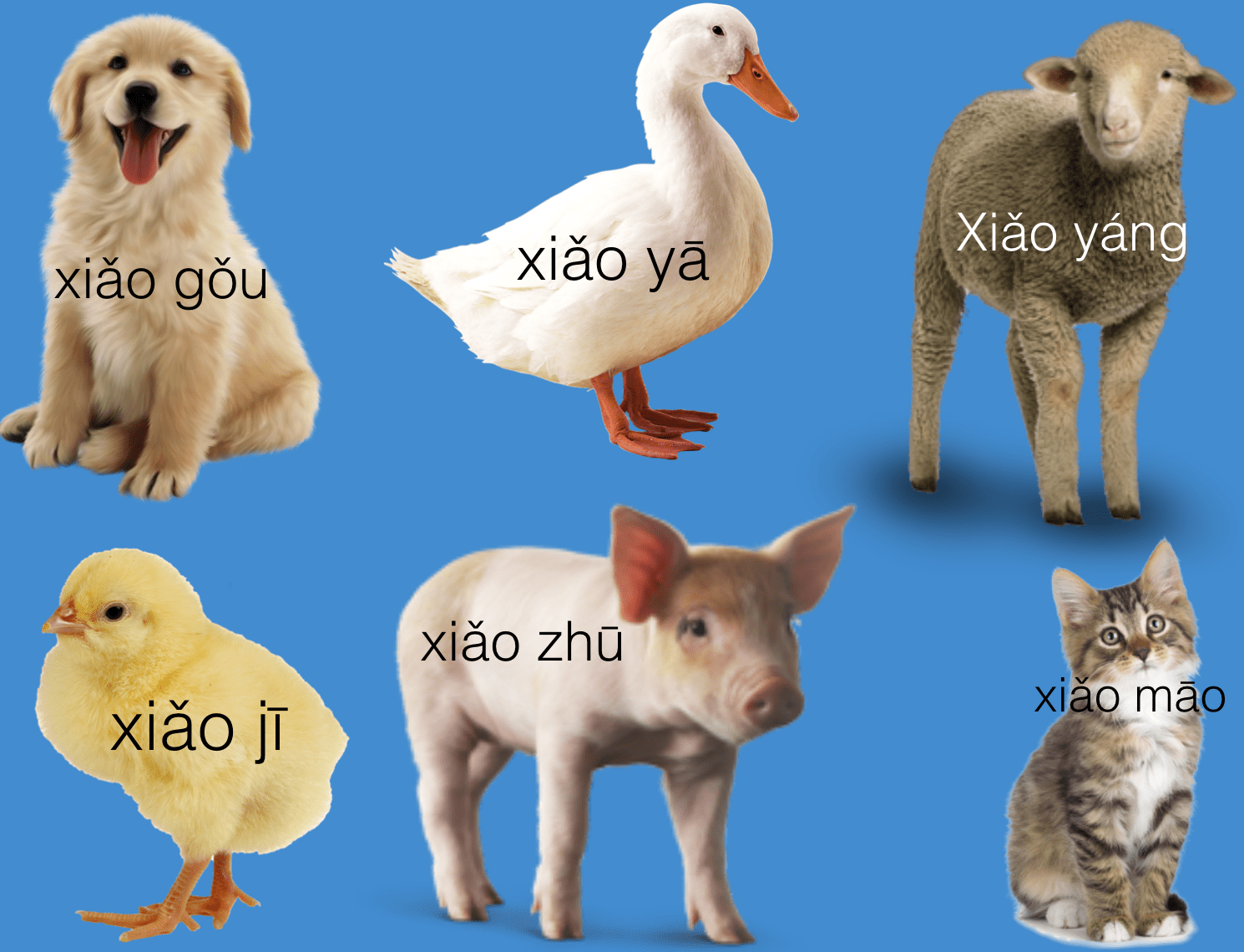 Animals For Young Learners Pinyin Creative Chinese