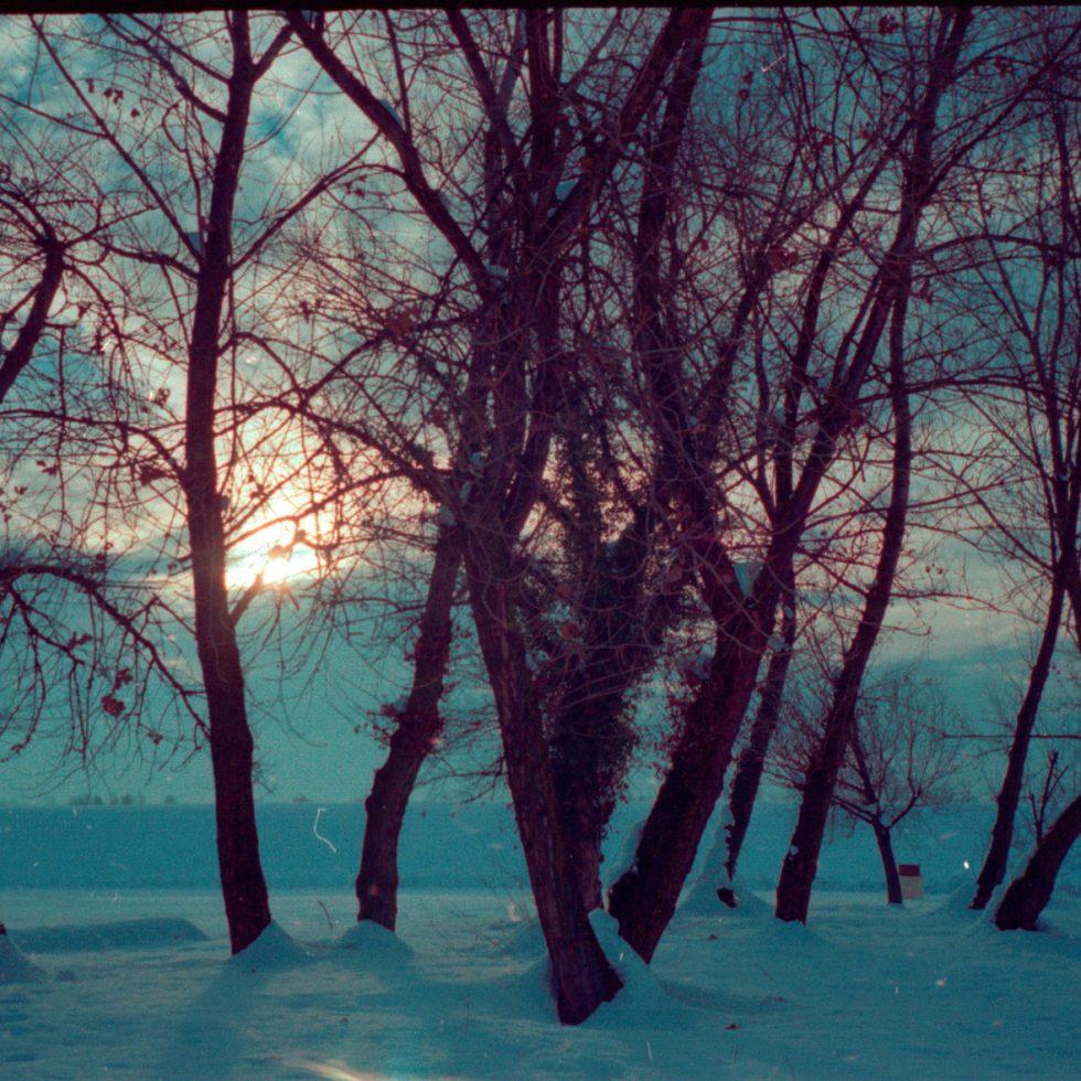 image of still trees in snow
