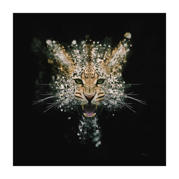 Leopard Face Dispersion by Mik Strevens