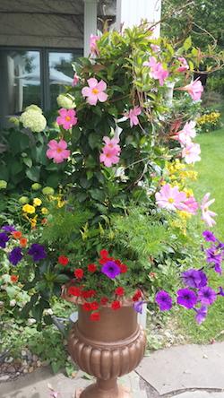 Summer Gardening Container in Minnetonka MN