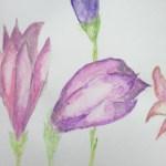 Orhidee radioasa – culoarea anului 2014