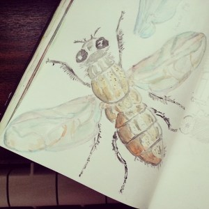 house fly illustration by Cristina Parus @ creativemag.ro