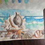 Painted Watercolor Shells