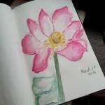 Watercolor Pink Magnolia