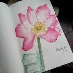 Watercolor Pink Magnolia