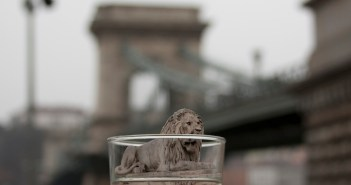lion in glass of water