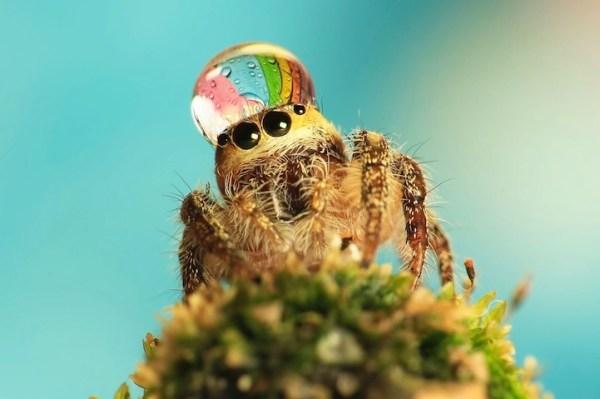 spiderswaterdrops02