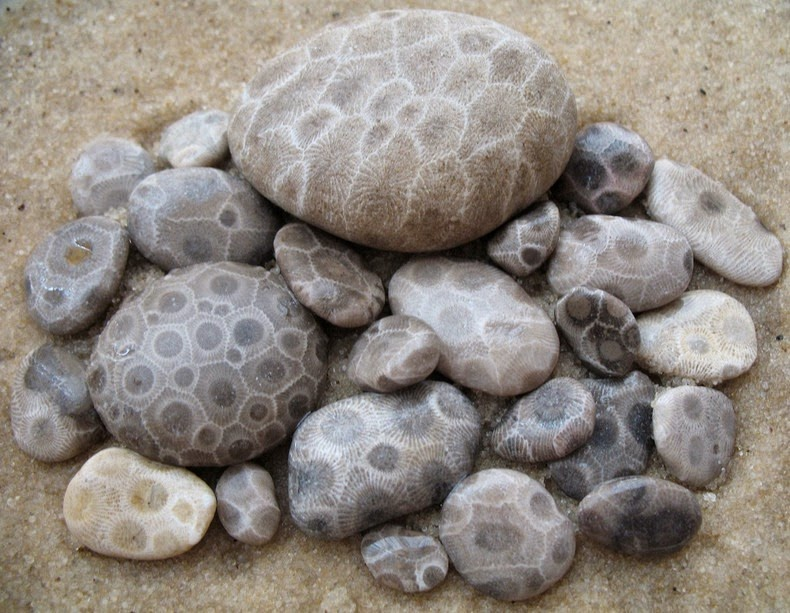 creative visual art amazing patterns michigan s petoskey stones. Black Bedroom Furniture Sets. Home Design Ideas