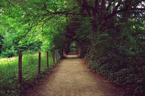 Beautiful Nature Path