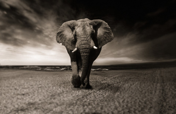 Animal Photography Free download