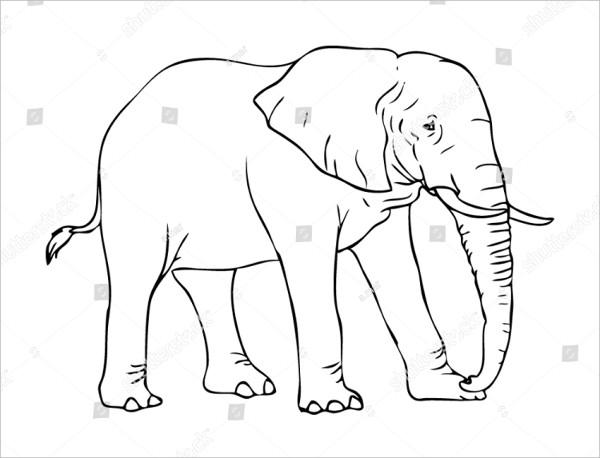 Elephant Line Drawings