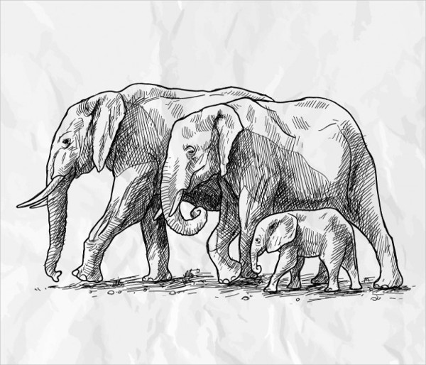 Free Download Drawing of Elephants