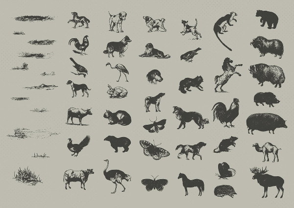Vintage Animals Drawing Bundle