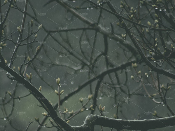 Branches in Rain Background