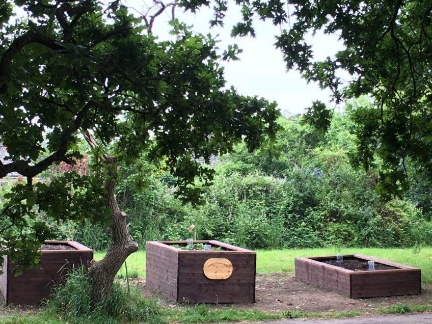 Rookery Community Garden