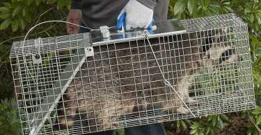 Best Animal Trap Reviews