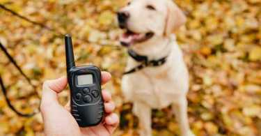Best Remote Training Collar Reviews