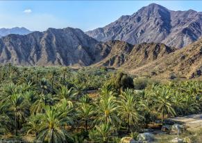 Oase Vereinigte Arabische Emirate