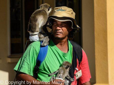 Affen Dompteur St Kitts Karibik