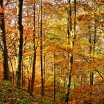 Sonniger Herbst 01