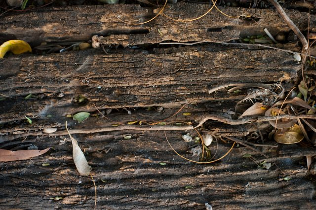 Background Of Rotting Wood Free Backgrounds And Textures