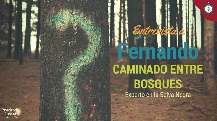 entrevista sobre la selva negra a fernando de caminando entre bosques