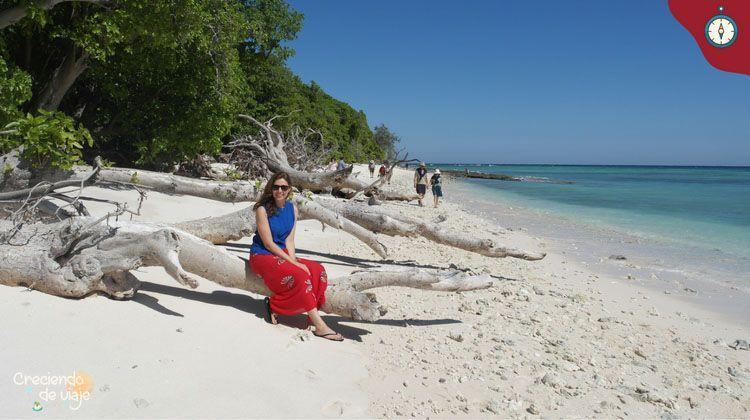 la gran barrera de coral lady musgrave